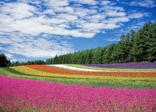twcmjHokkaido- flower-garden