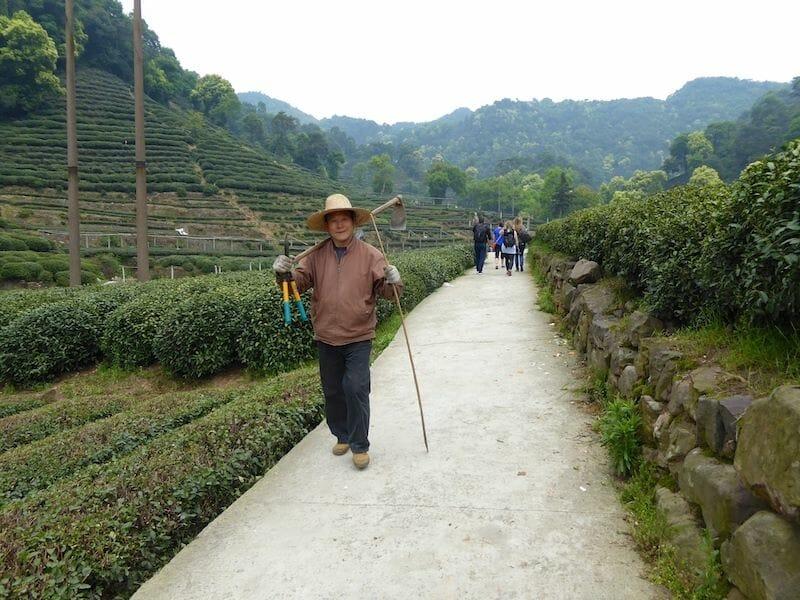 Longjing Tea Plantation, Hangzhou, China