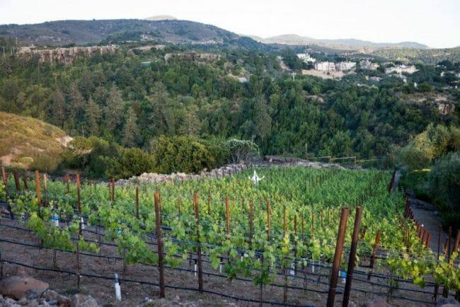 luna vineyards napa