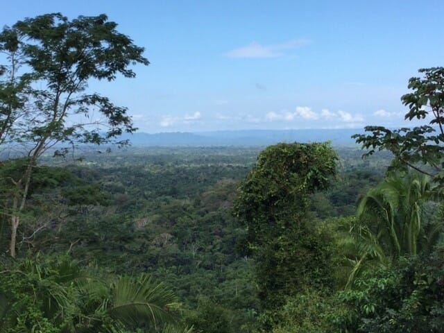 a view from copal tree lodge belize