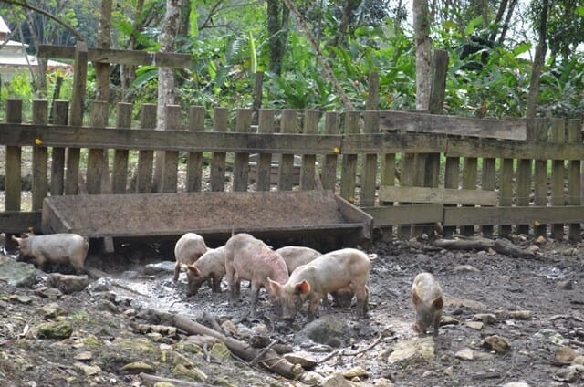 sustainable farming in belize