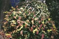 Exploring New York Botanical Gardens' Orchid Show