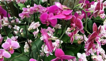 are there gorgeous flowers at the new york botanical gardens