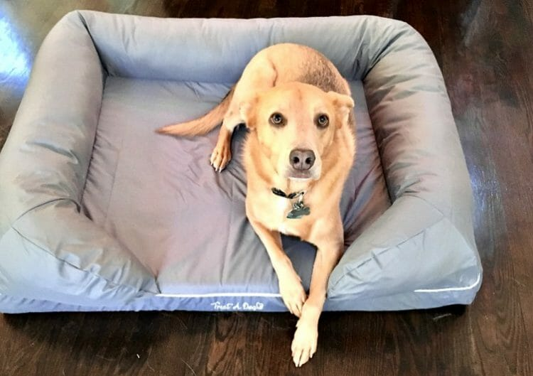 what are some products for pets like a treat a dog bed