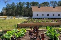 Planning a Fall Garden? 8 Vegetables to Plant Now