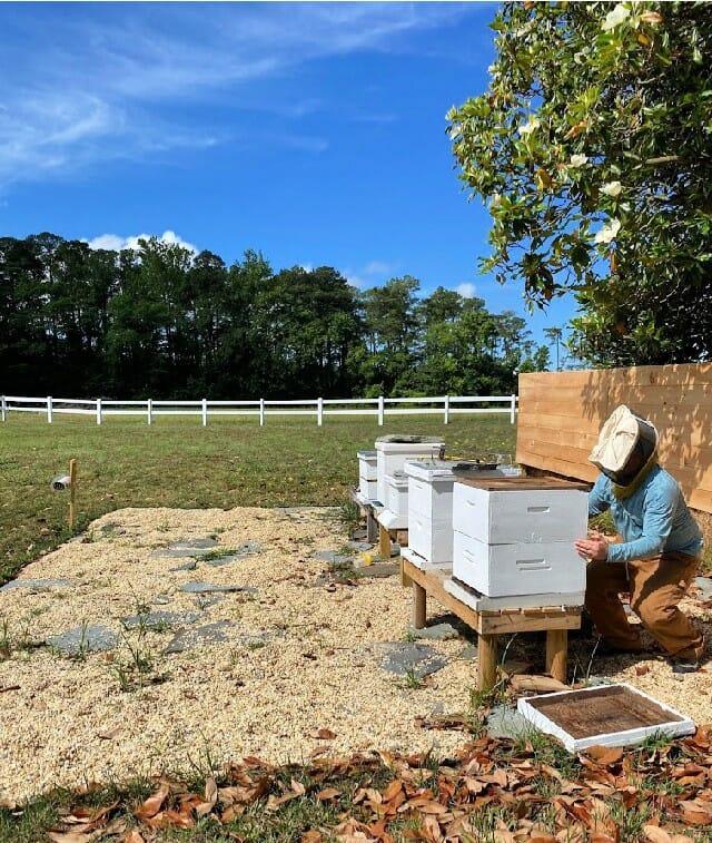 bee hives at Sugar Water Manor