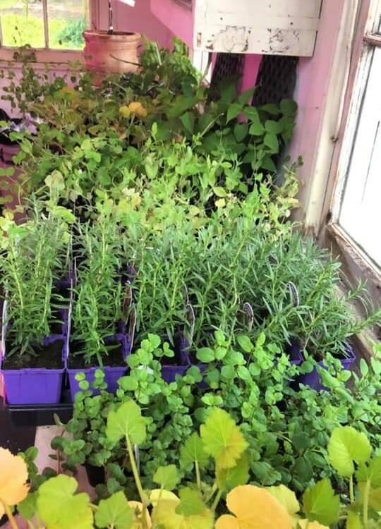 gifts for gardners growing herbs and for gardening hacks