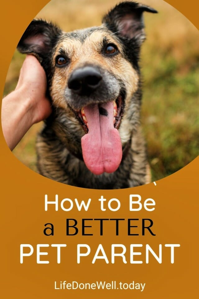 how to be a better pet parent