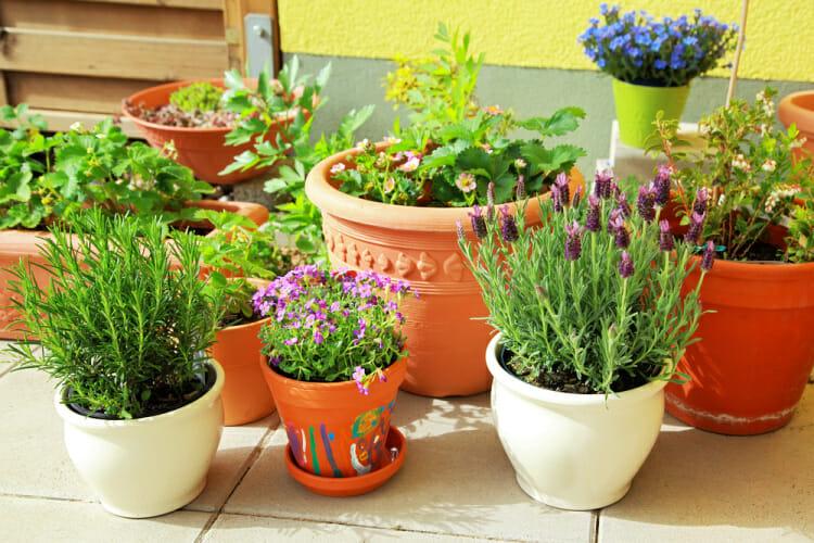 container garden ideas show varying pots