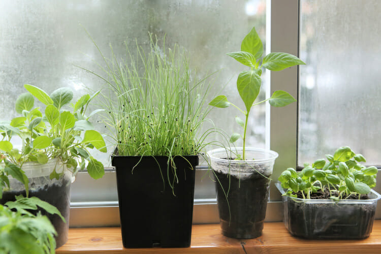 vegetables in a container garden