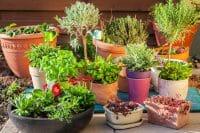 15 Inspiring Container Garden Ideas