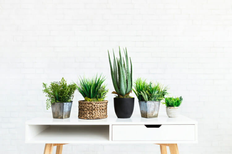 spring cleaning hacks recommend plants